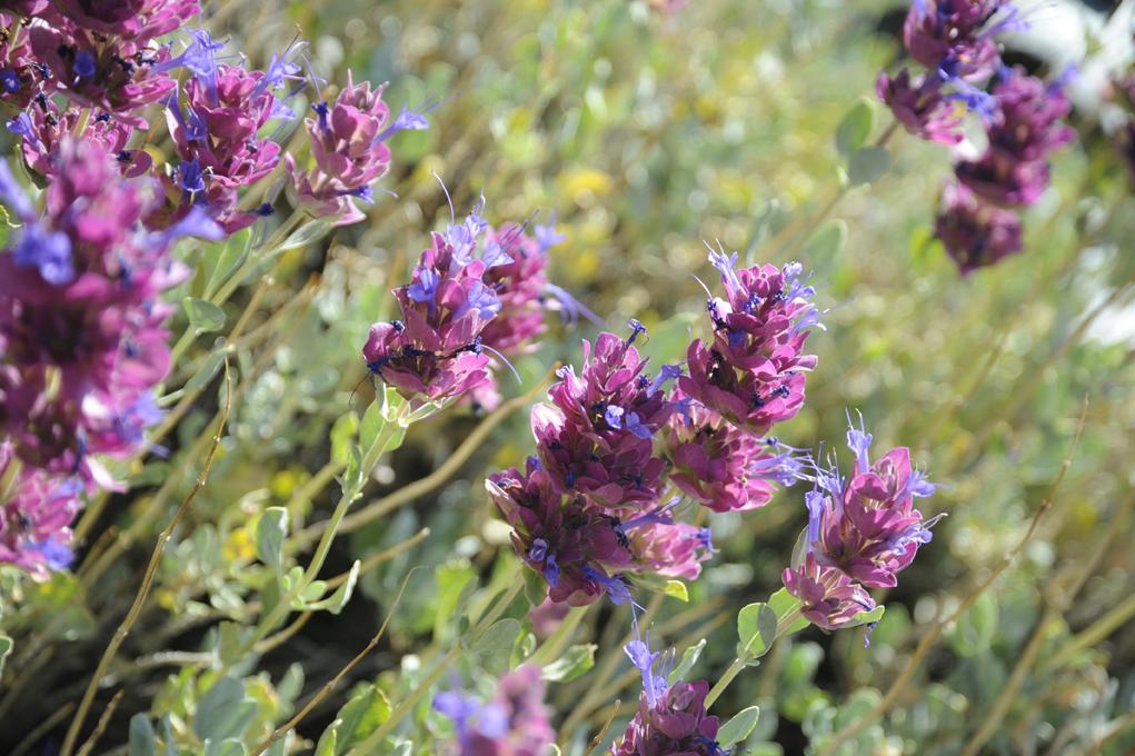 purple-wildfowers