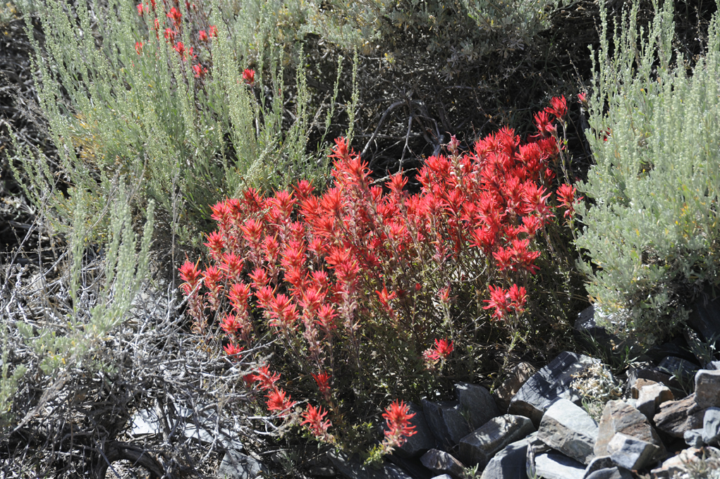 red-wildflowers