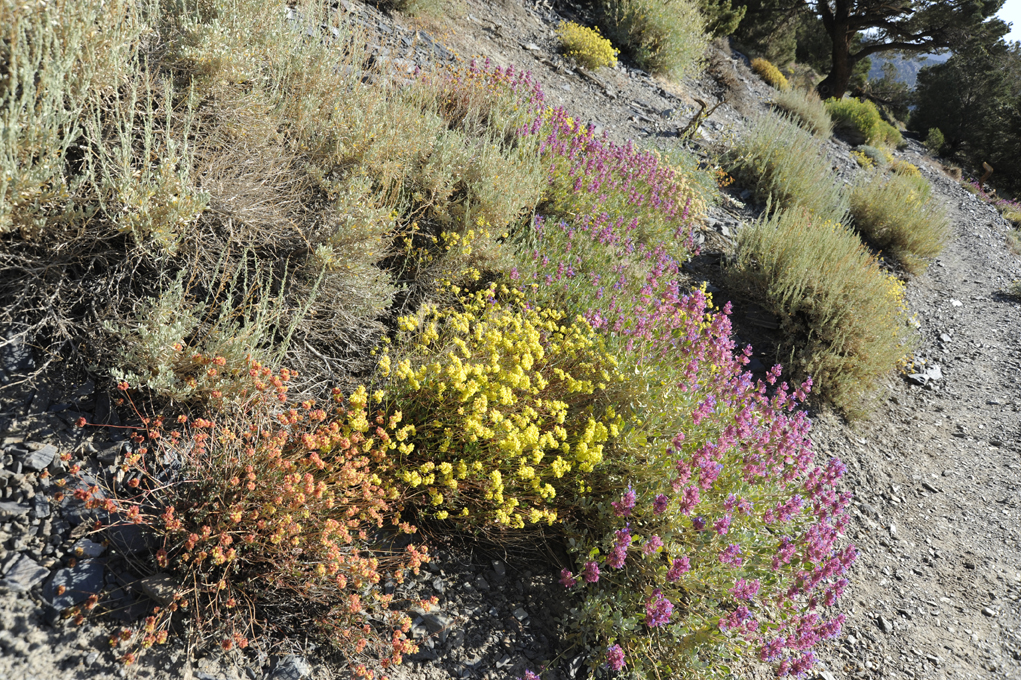 some-of-many-wildflowers